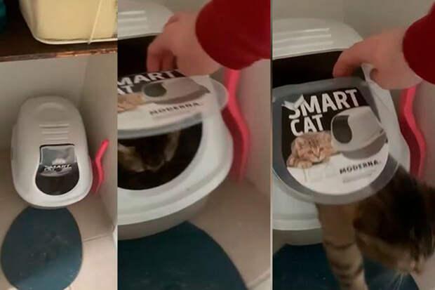 «Выпусти меня!»: навидео попал кот, оказавшийся вловушке своего лотка