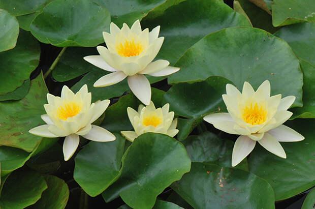 Как придать неповторимый облик садовому пруду