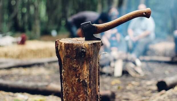 Лесники о работе во время эпидемии, санитарных рубках и охране леса в Мытищах