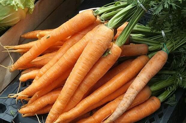 Вкусная морковь. Советы по выращиваю качественного урожая