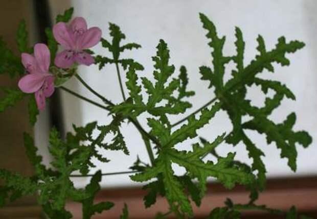 Комнатные растения для настроения