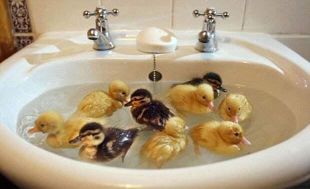 Отдыхают с парнями ванна, вода, домашние питомцы, животные, милота, позитив