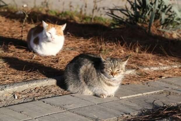 Волонтеры в Ялте продолжают поиски пропавших кошек и собак