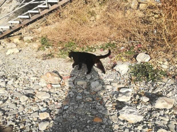 Прогулка по «зимней» Анапе, и коты. часть 2.