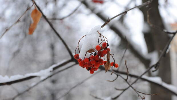 Конец февраля будет самым малоснежным периодом этой зимы в Московском регионе