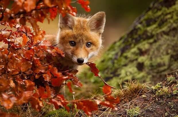 Животные, которые наслаждаются волшебством осени
