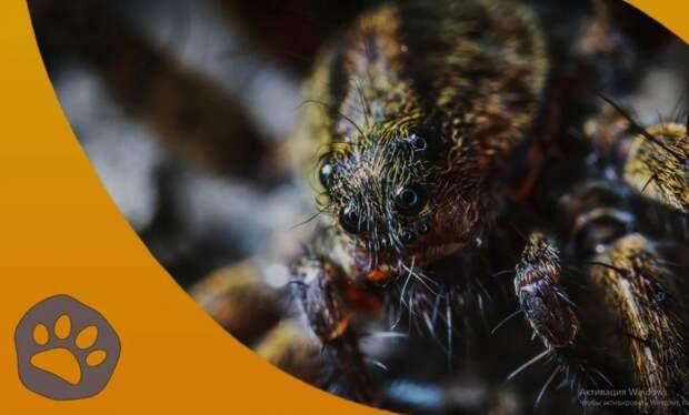 Почему самки некоторых насекомых съедают самцов?