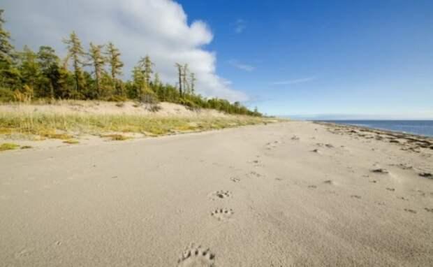 Добыча песка разрушит экосистему национального парка «Онежское Поморье»