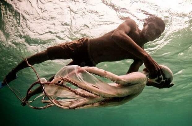 Это единственное, пожалуй, племя в мире, живущее в море. На лодках лепа-лепа они проводят всю жизнь, промышляя добычей жемчуга и рыбной ловлей.