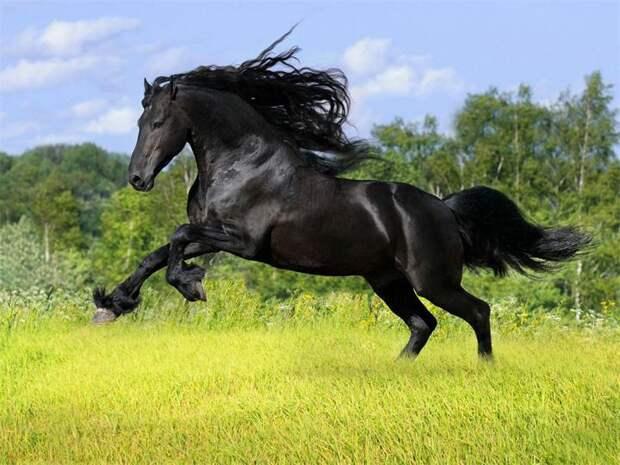 Mustang-лошадь.