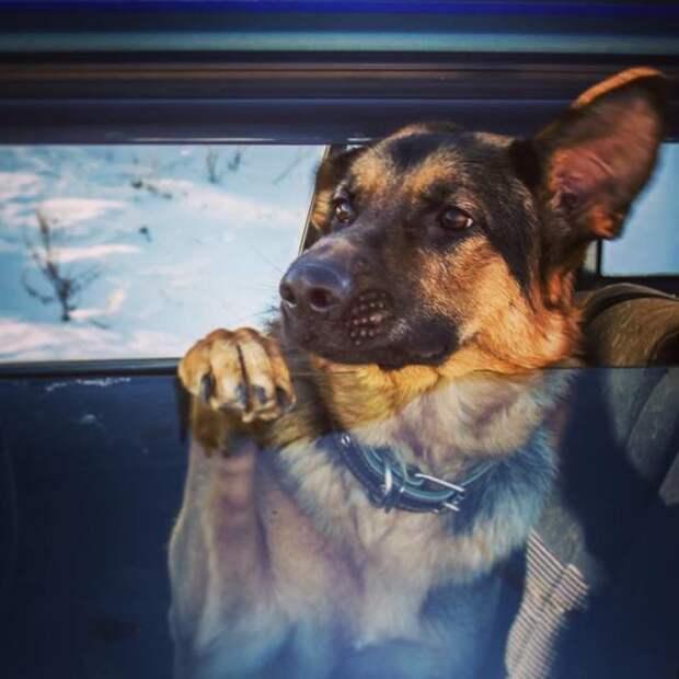 Одна неделя из жизни животные, история, служебная собака