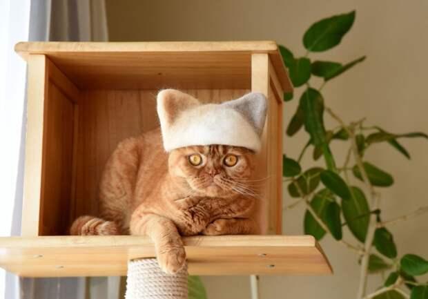Если коты линяют... (подборка)
