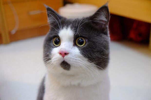 15. Что там? животные, коты, кошки, милота, питомцы, фото