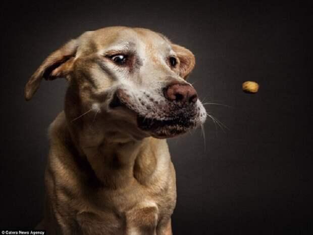 10 трогательных моментов, когда собака выглядит эмоционально