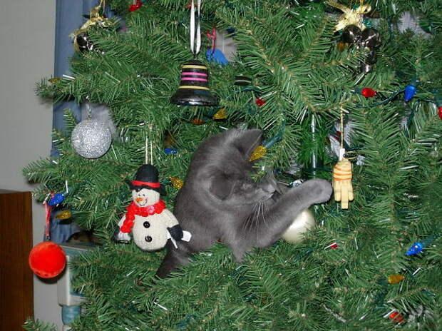 49. Последний штрих елка, кошка, подборка