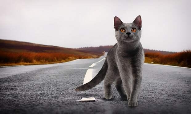 Кошки способны различать голоса хозяев, выяснили ученые