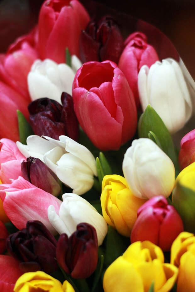 С Праздником весны любви и красоты!