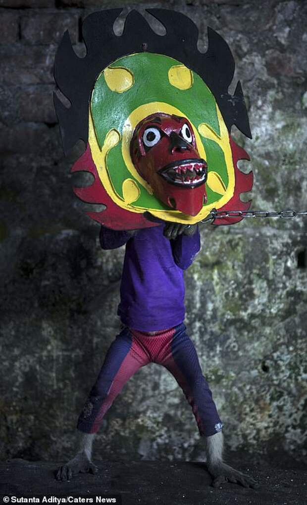 Another monkey is forced to wear a grotesque coloured mask