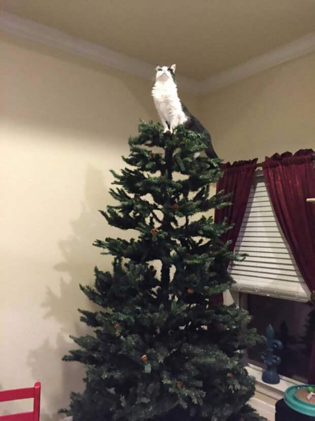 9. Вместо звезды елка, кошка, подборка