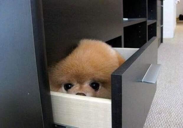 Собачки которые очень хотели спрятаться-3
