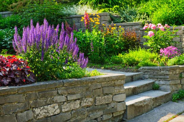Где и какие цветы сажать: памятка для дачников