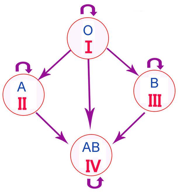 Схема-переливания-групп-крови11.jpg