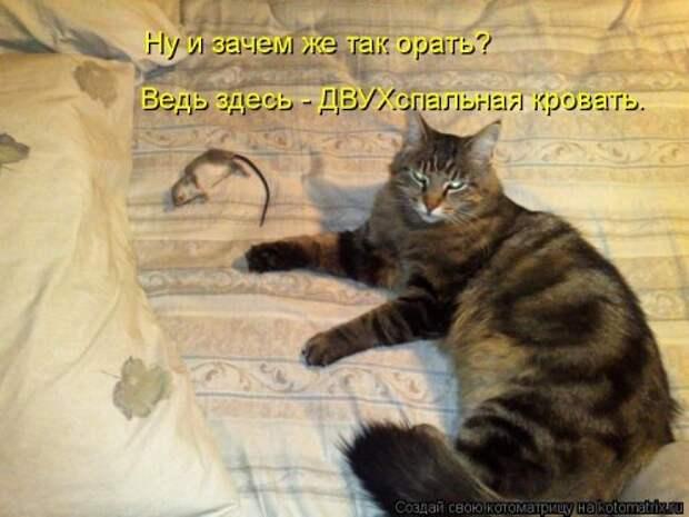 Свежая котоматрица для всех (41 фото)