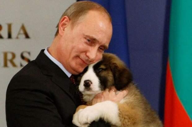 putin-dog5