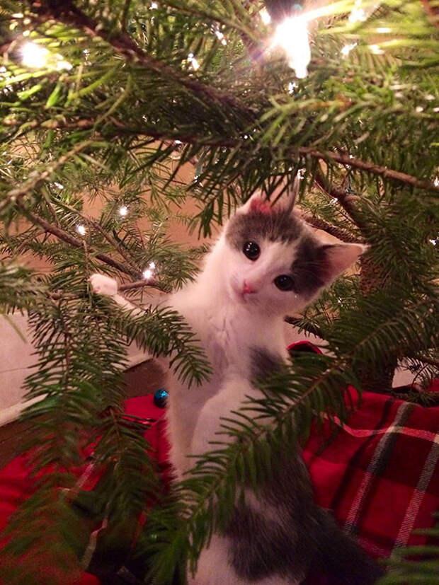 13. Не уверен, что нам нужна елка елка, кошка, подборка
