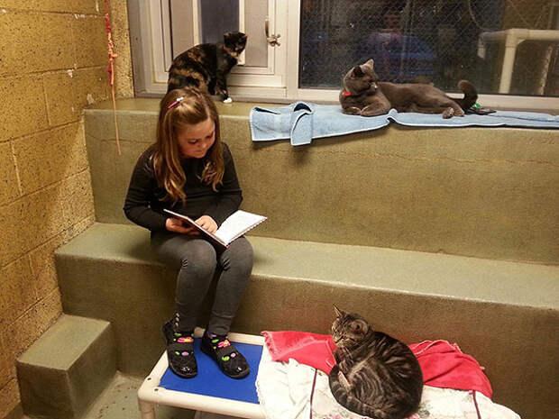 reading-children-shelter-cats-book-buddies-2