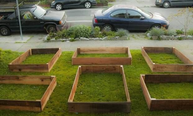 Всего за60дней этот парень вырастил крутой сад перед домом