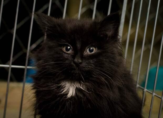 Пушистые комки счастья Кошка в доме, котята, кошаки, кошка