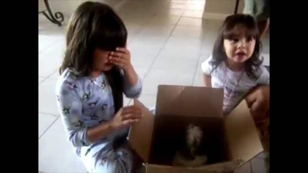 Как выглядят люди, которым дарят щенков