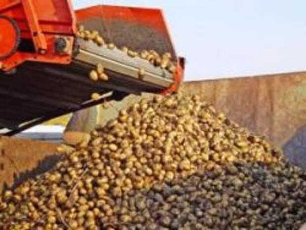 Новость на Newsland: Белоруссия готова накормить Россию картофелем