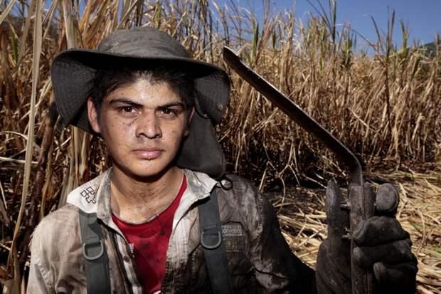 Работник плантации сахарного тростника