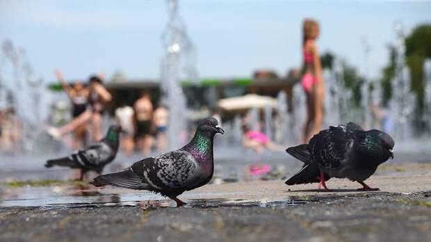 Двойной рекорд температуры может быть установлен в столице в среду