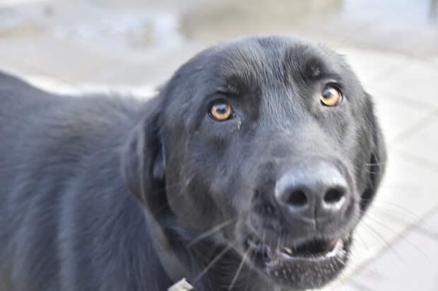 В Сочи на отлов бездомных животных направят 3,5 млн рублей