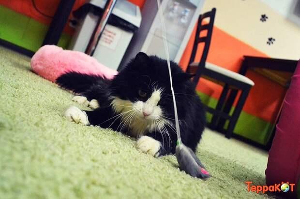 Еще одну мышку поймаю и все! Фото: instagram.com/terracat_cafe