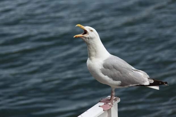 Наглая птица на пляже испортила парочке романтическое видео