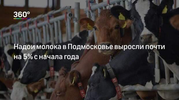 Надои молока в Подмосковье выросли почти на 5% с начала года