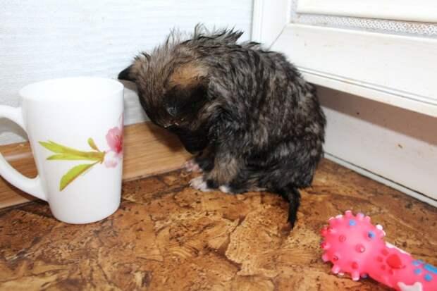 Люди заметили в зарослях травы крохотного безжизненного щенка