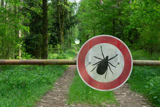 Россиянам дали советы по защите детей и питомцев от укусов клещей