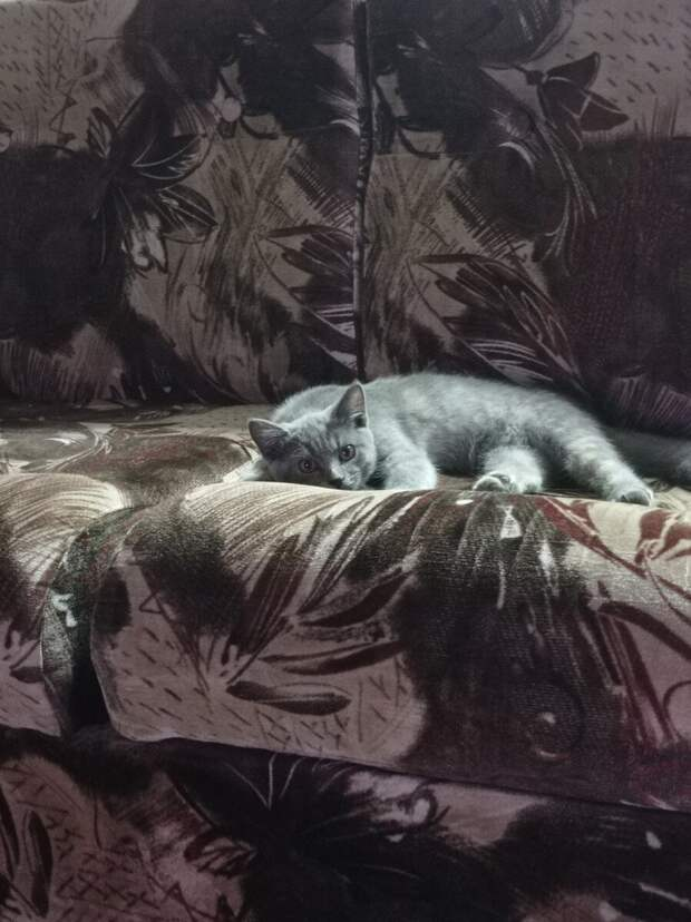 Кошка сама пришла и попросила помощи