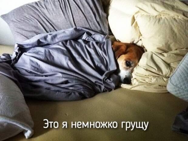 это я собака