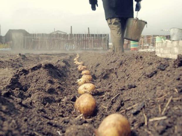 Картошка, посаженная в марте, попала под заморозки. Что делать?