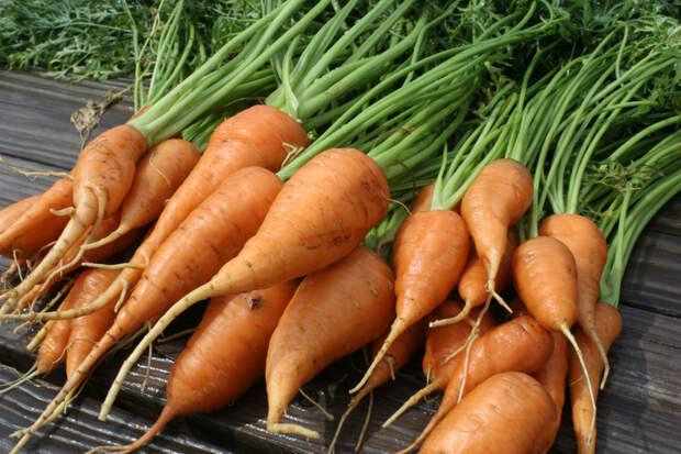Выращивание моркови на подложке из рубероида