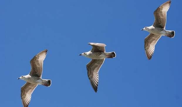 ВГайском городском округе обнаружены мертвые перелетные птицы
