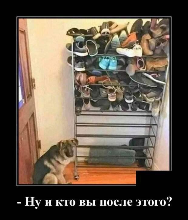 Демотиватор про собаку и обувь