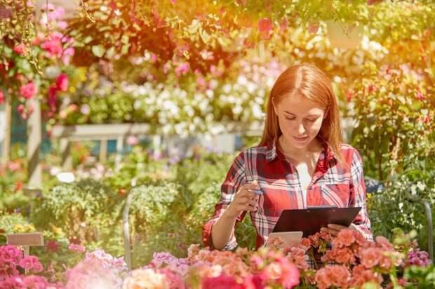 Как создать клумбу непрерывного цветения