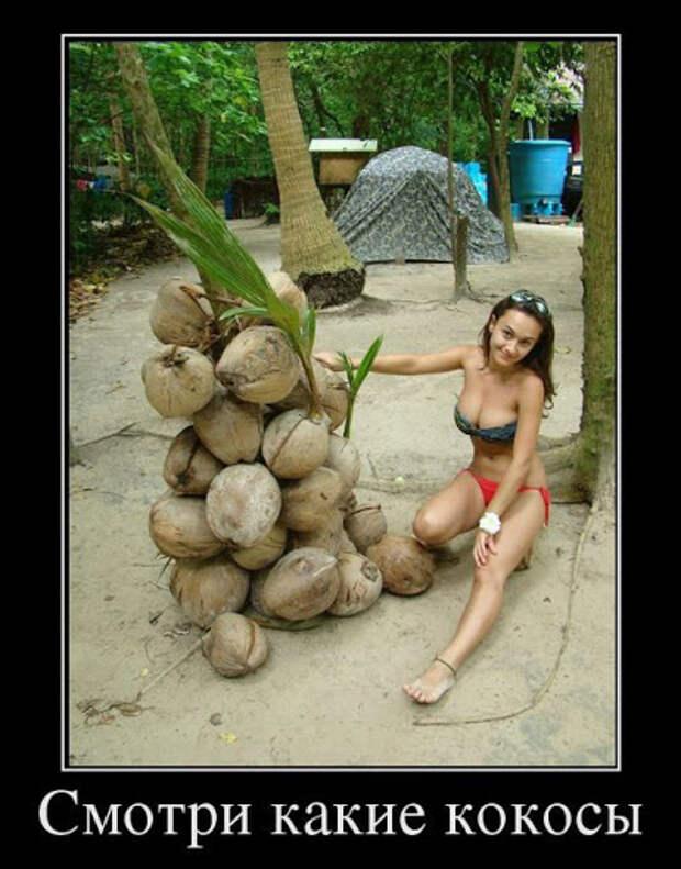 Смотри какие кокосы - Супер Демотиваторы - Подборка лучших ...